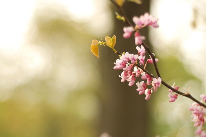 今日は春分の日!自然をたたえ、生物をいつくしむ日!そうだ!花見に行こう!!